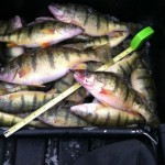 First Ice: Saginaw Bay Perch  12/29/2012