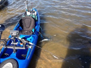 Walleye and Kayaks on Saginaw River