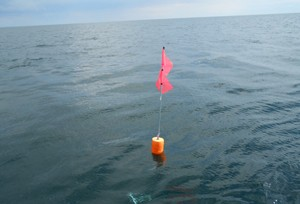 Trapnet buoy example for Harbor Beach research fishery