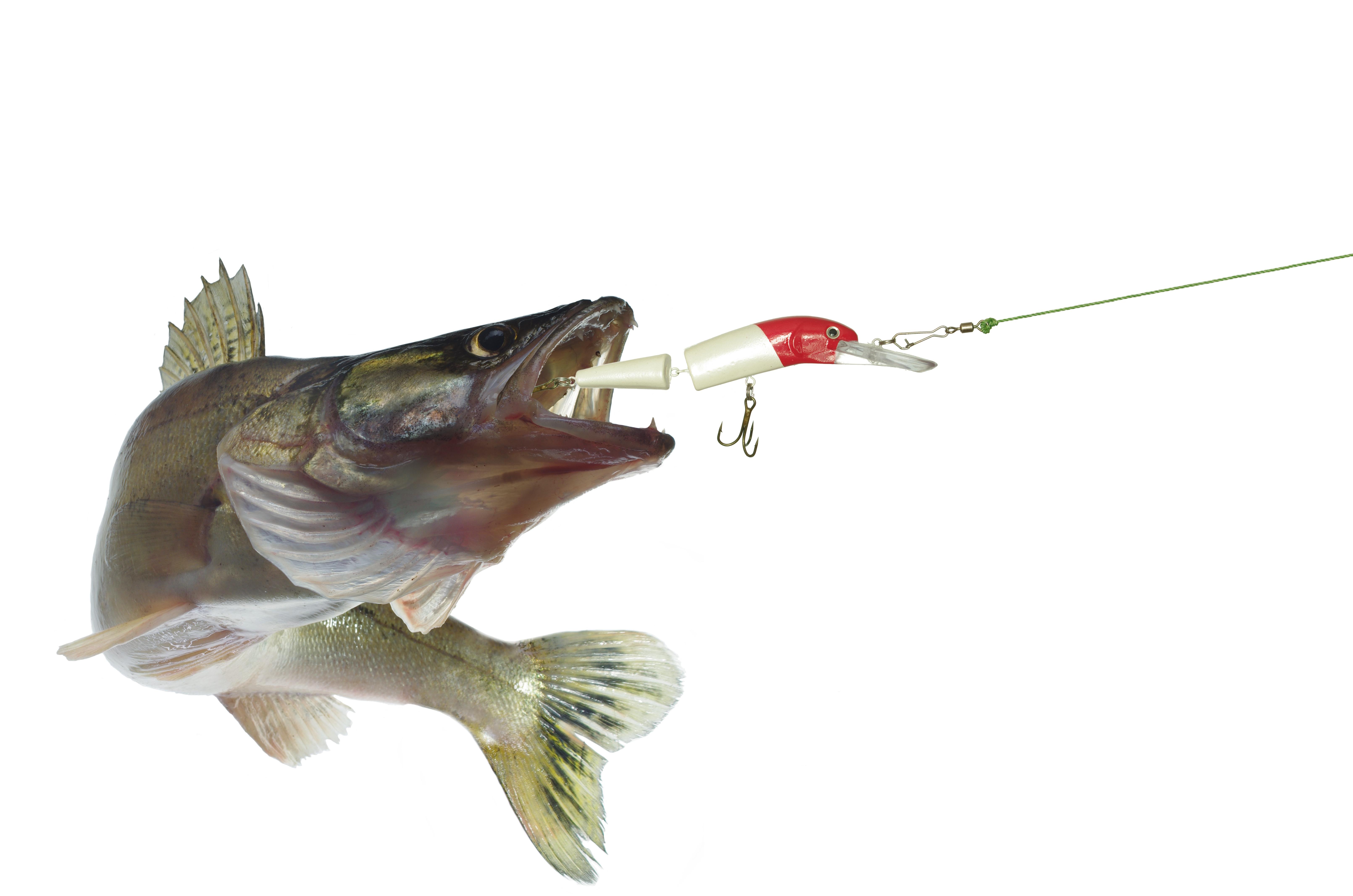 Saginaw Bay Area Weekly Fishing Report  04/28/2017