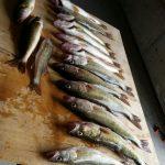 Saginaw Bay Area Weekly Fishing Report  05/04/2017