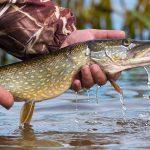 Saginaw Bay Area Weekly Fishing Report  05/25/2017