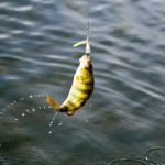 SAGINAW BAY Fishing Report  9/07/2017