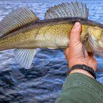 Saginaw Bay Area Fishing Report 05/04/2018