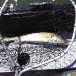 Saginaw Bay Area Fishing Report June 07, 2018