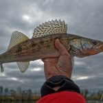 Saginaw Bay Area Fishing Report 11-08-2018